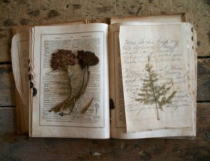 book-with-pressed-flora-and-fauna