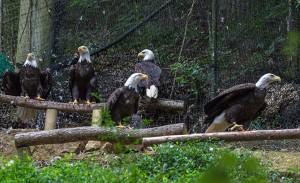 eagle-mountain-sanctuary
