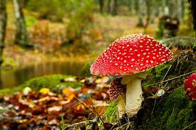 autumn mushroom scene